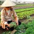 Поиск работы иведение бизнеса воВьетнаме