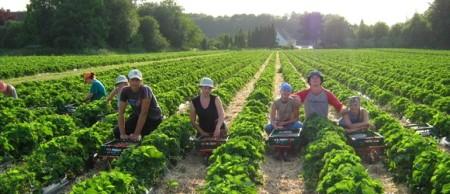 Сельское хозяйство в Норвегии